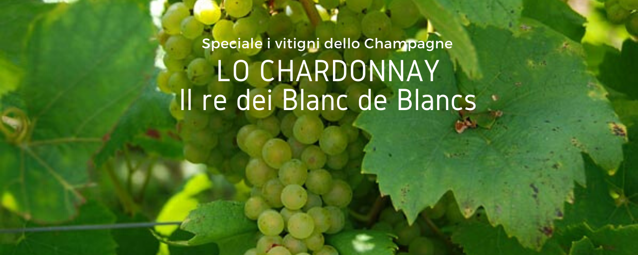 I vitigni dello Champagne – Lo Chardonnay
