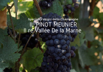 Pinot Meunier Champagne Cover