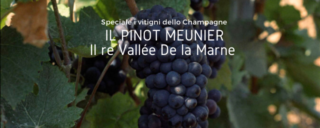 I vitigni dello Champagne – Il Pinot Meunier