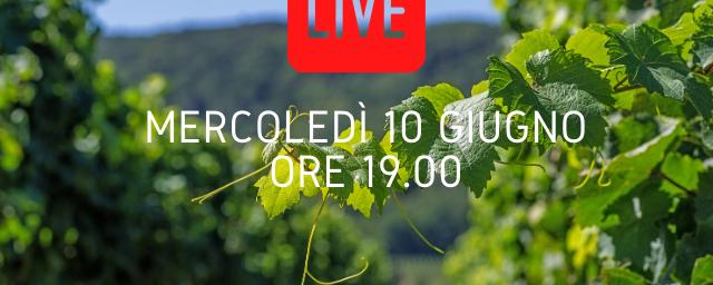 Guida alla produzione del vino (LIVE)